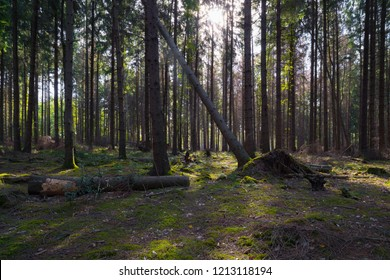 forest with some fallen trees and the sun shining through
