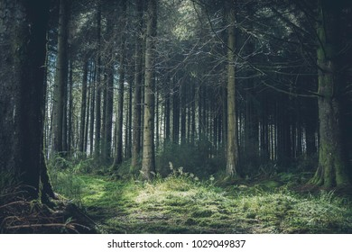 FOREST, SOUTH WALES