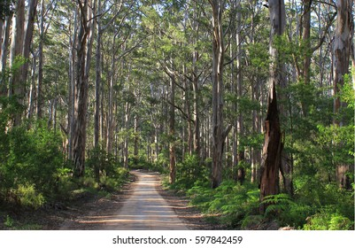 Forest in the South West of Australia, in the Margaret River region, Western Australia.