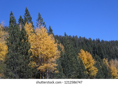Forest speckled with fall colors.