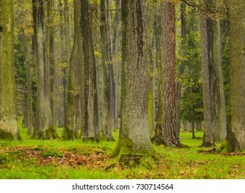 Forest, spring season, Fresh woodland Brdy Czech Republic