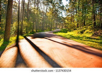 Forest in spring, sun and shadows