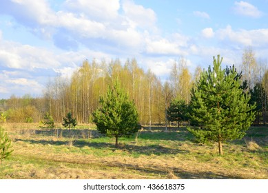 Forest at spring sunny day.