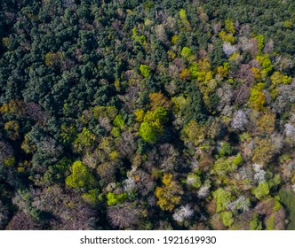 Forest in spring in Tarrueza village within Eastern Coastal Mountain Range of Cantabria Autonomous Community of Spain, Europe