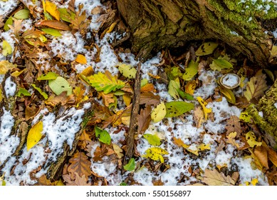 Forest still life, with early snow, and autumn foliage covered