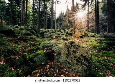 Forest, stones and sunshine
