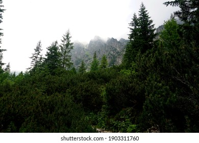 Forest with storm-damaged trees in the High Tatras Valley, Slovakia