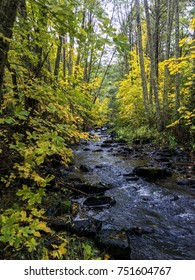 Forest stream in autumn in Oregon.