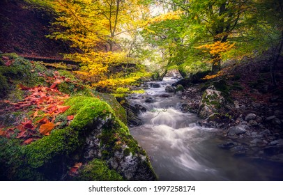 Forest stream in the autumn forest. Autumn forest stream view. River stream in autumn forest. Autumn river stream in autumnal forrest
