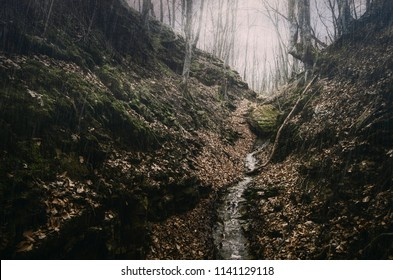 forest stream during autumn rain, rainy weather landscape in the woods