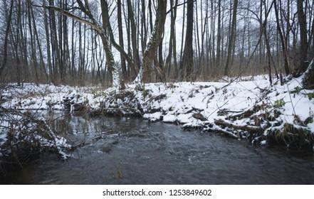 forest stream landscape, winter or spring time