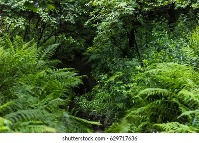 Forest stream and lush green plants