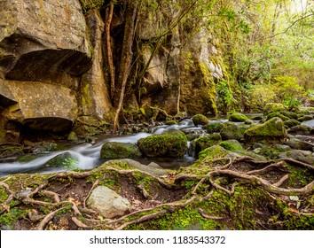 Forest Stream, Petrohue, Llanquihue Province, Los Lagos Region, Chile