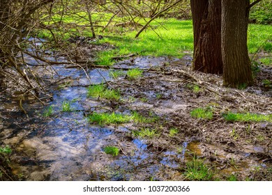 A forest stream with pure water flows in the spring on a sunny day near the tree trunk.