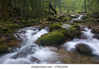 Forest stream running over mossy boulders.