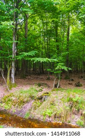 A forest stream with a sandy bottom on the background of a thick and dark hornbeam forest, in which does not penetrate the sun's rays. Ukrainian nature.