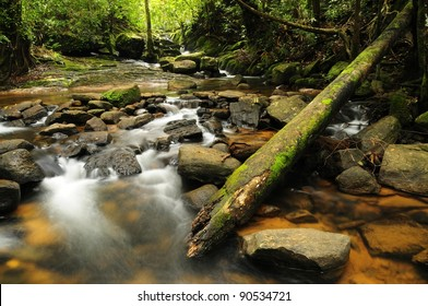 Forest stream in Sri Lanka