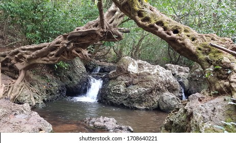 forest stream wooded valley stockphoto