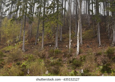 Forest in Sudety mountains in Poland