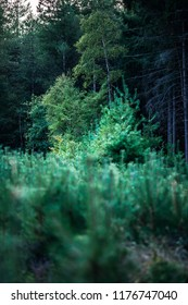 Forest in summer with different tree species at dusk.
