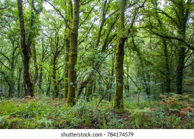 Forest in summer in galicia spain