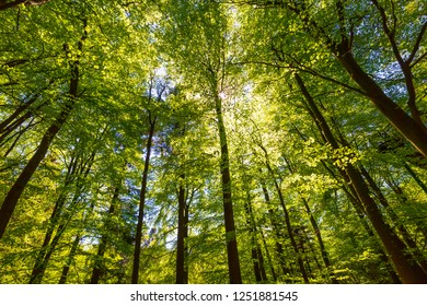 Forest in Summer. Green leaves and sunlight effect through the branches and floor.