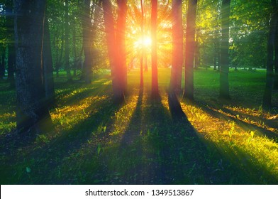 Forest summer landscape - trees with grass on the foreground and sunlight shining through the forest trees, colorful summer forest nature