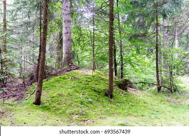 forest in summertime at daylight in flims