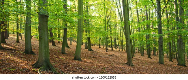 Forest in the summertime in the sunny day