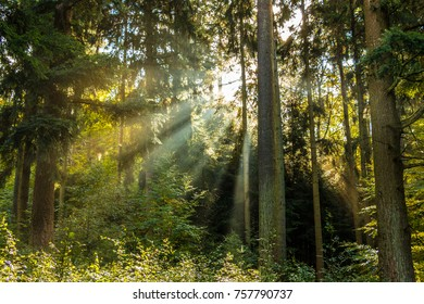 Forest and the sun