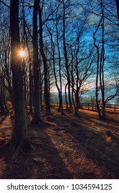 Forest sun kissed in Spring nearing sunset
