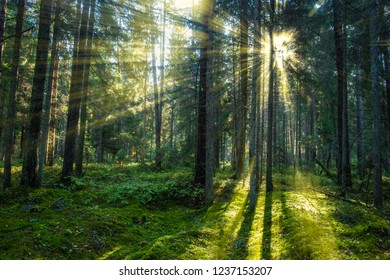 Forest sun light sunray