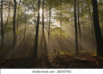 Forest with sun rays filtering through