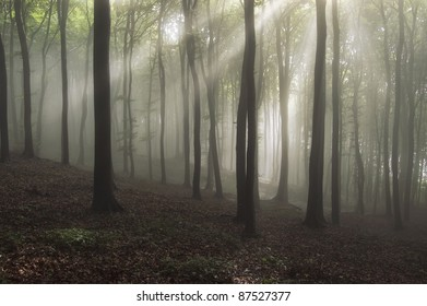 forest with sun rays and fog after rain