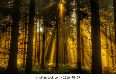 Forest sunbeams through trees view. Sunbeams forest. Sunbeams in forest. Deep forest sunbeams