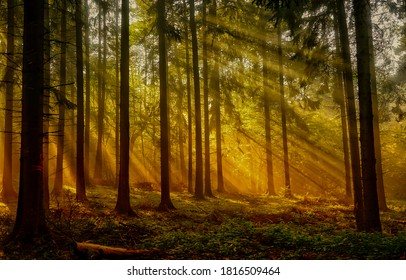 Forest sunbeams through trees view. Sunbeams forest trees. Beautiful forest sunbeams. Fairy forest sunbeams