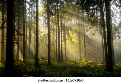Forest sunbeams trees background. Sunbeams in forest. Forest sunbeams scene. Sunbeams in forest landscape