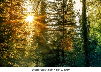 Forest Sunburst