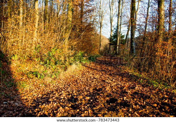 Forest in Sunlight