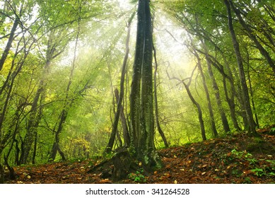 forest sunlight. Composition of nature