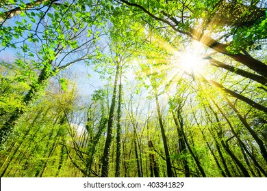 Forest with sunshine at springtime