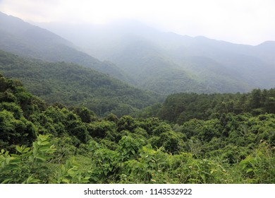 The forest in Tam Dao, Vietnam