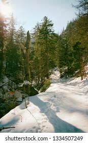 Forest in the Tatras National Park, Zakopane, Poland.