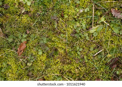 Forest terrain sample. Forest meadow texture. Silvan grass and plants. Overhead shot. Forest grass field, overhead shot. Green field texture. Mead  terrain sample. Herb meadow surface. Green hayfield