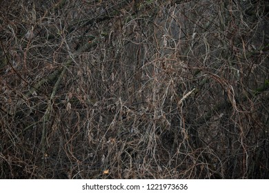 forest texture - background