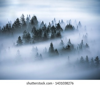 The forest through the mist