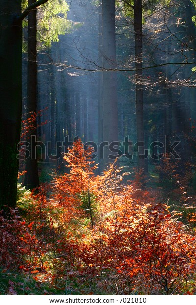 Forest in Thuringia, Germany. Early in the morning