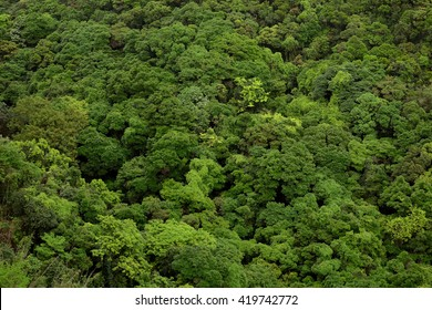 Forest top view on Mountain High