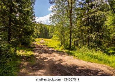 Forest tourist routes in Russia. Hiking outdoors on rough terrain.
