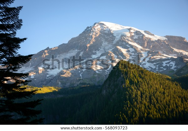 Forest and the Towering Peak of Mount Rainier National Park